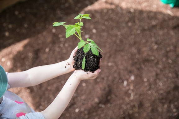 Planting trees by kid at Endeavour Early Education - EEE